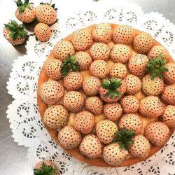 Crostata di fragole bianche